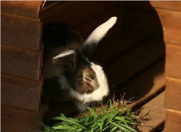 可爱的小兔兔